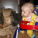 Домашние животные и ребенок. Кто и когда