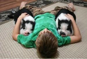 Какое домашнее животное завести для ребенка