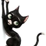 Кошки и кошачьи заметки