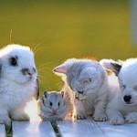 Животные — лекари, часть 1