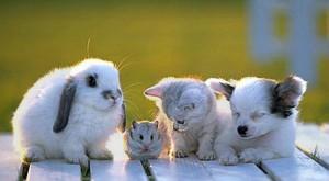 Животные - лекари