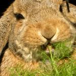 Кролики — это не только ценный мех…!
