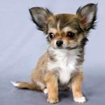 Маленькая собачка с огромной душой