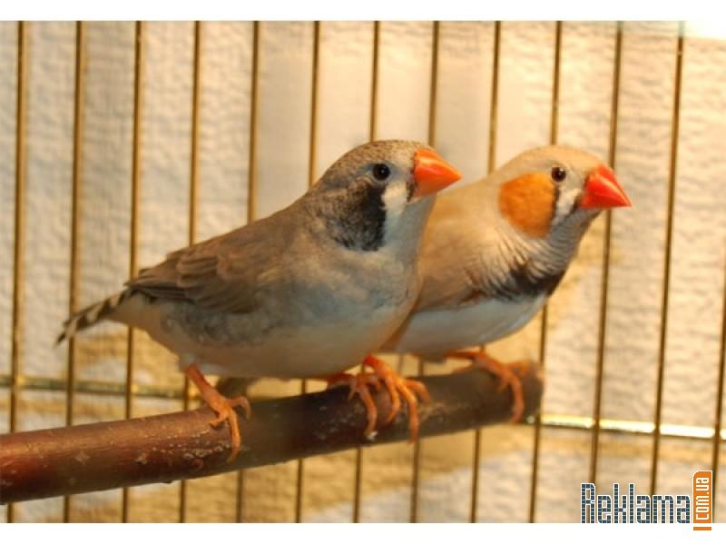 Птица в домашних условиях