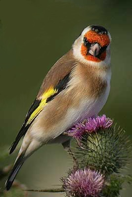 Уход за птицами, ДОМАШНИЕ ЛЮБИМЦЫ