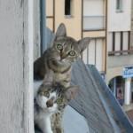 Чем полезен кот в квартире?