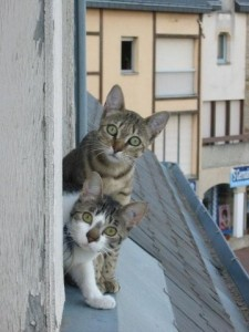 Кот в квартире