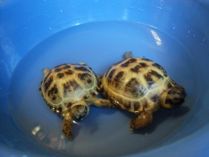 Как купать черепах