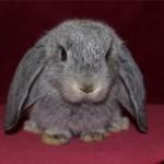 Кролик-мальчик или девочка, кого выбрать лучше?