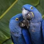 Общение с попугаем.