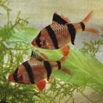 Самые распространенные вопросы начинающего аквариумиста