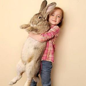 Кролик для ребенка