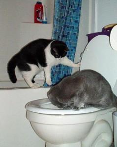 Как приучит котенка к туалету