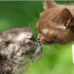 Кошка хочет кота – что делать?