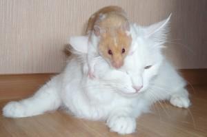 Дружба у животных