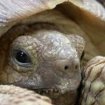Спячка черепах, часть 1