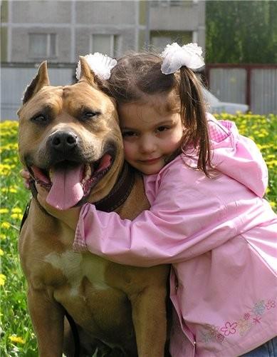 знакомства любители собак phpbb