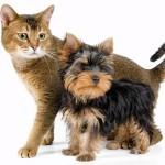 Как подружить домашних животных