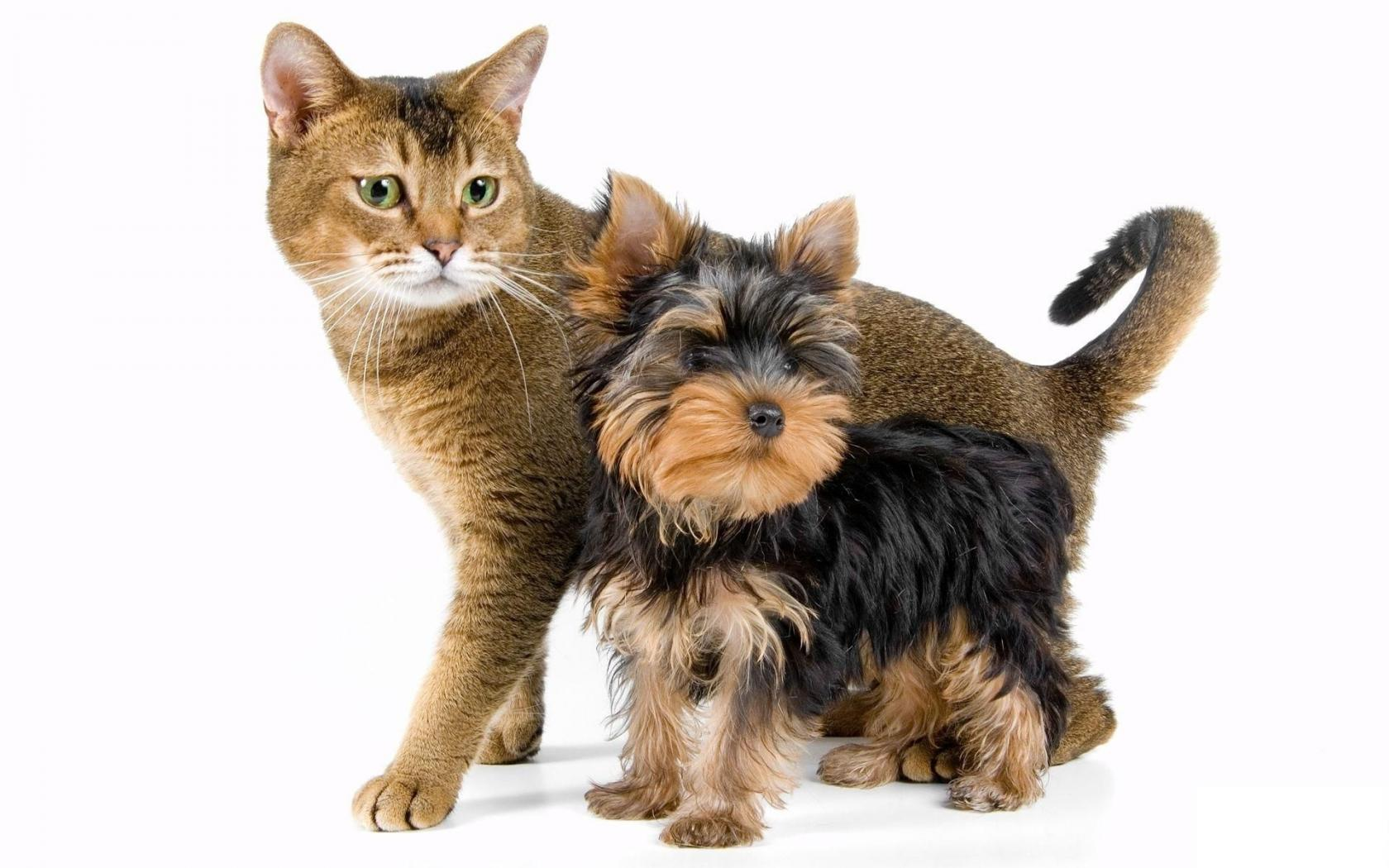 фото животных для