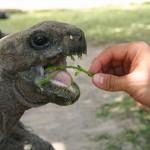 Чем кормить черепаху можно. Виды корма