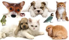 Заблуждения владельцев домашних животных