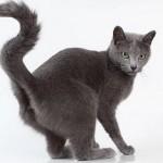 Как отучить кота метить?