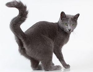 Метки кота