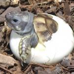 Уход за новорожденными черепашками