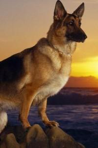 Какую породу собак выбрать