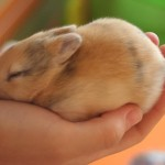 Где купить карликового кролика