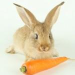 Чем кормить карликового кролика? Опасный корм