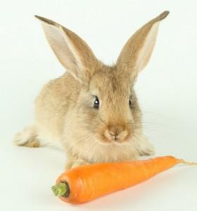 Чем кормить карликового кролика