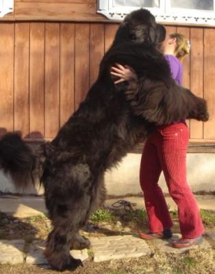 Породы собак с фото Список пород собак