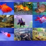 Покупка аквариумных рыб. Подбор рыбок