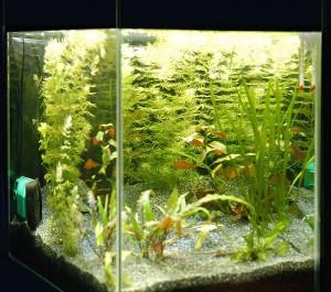 Как нагреть воду в аквариуме