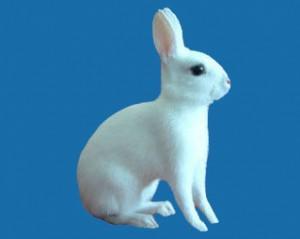 Британский польский кролик