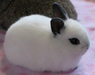 Фото забавные кролики