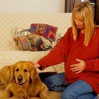 Беременность и домашние животные собаки