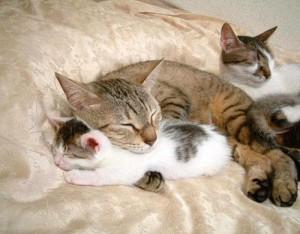 Язык домашних животных. Кошки
