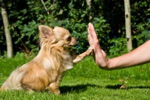 Язык домашних животных. Собаки