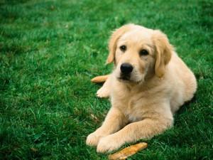 Хочу завести собаку!