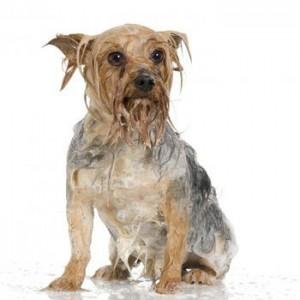 Уход за шерстью собаки