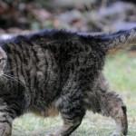Самая старая кошка в мире!