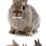 Подготовка к разведению декоративных кроликов