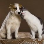 Язык домашних животных