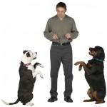 Основы дрессировки собак