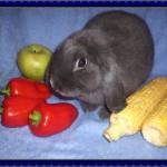 Чем можно кормить декоративного кролика?
