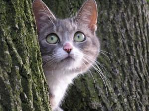 Вы подобрали кошку на улице