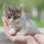 Если вы подобрали котенка на улице…