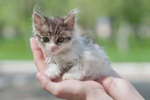Если вы подобрали котенка на улице